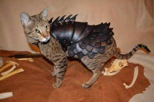 Yes you can: Cat Battle Armor