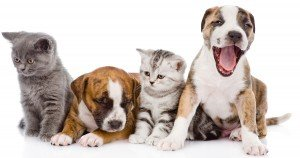 Why mandatory spay and neuter laws don't work