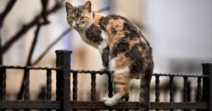 Feral Cats: What To Do With Them: The Debate Heats Up Nationwide