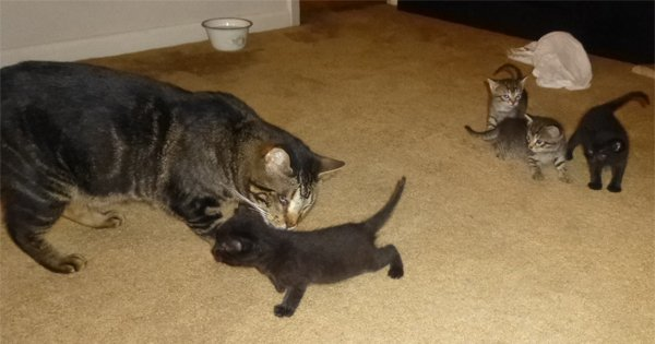 Blind Cat Helps Give Kittens A Second Chance Cattime