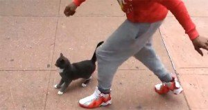 Facebook users mobilize to bring Brooklyn cat kicker to justice