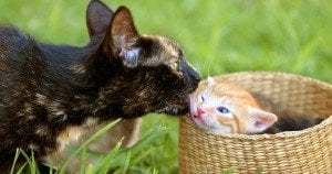 For Mother's Day: 25 Pictures Of Mama Cats And Their Kittens