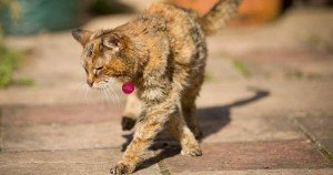 Poppy is officially world's oldest cat
