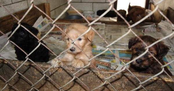 More Than 90 Dogs Rescued From Michigan Puppy Mill Cattime