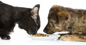 Pet store owner lives on pet food for 30 days