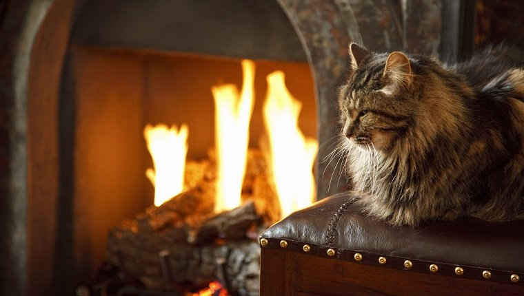 Long haired cat in front of lit fire. pet fire safety
