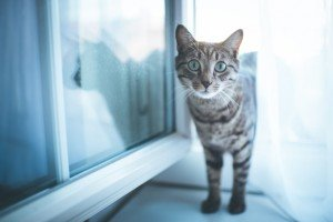 Cats See Things That Are Invisible To Humans