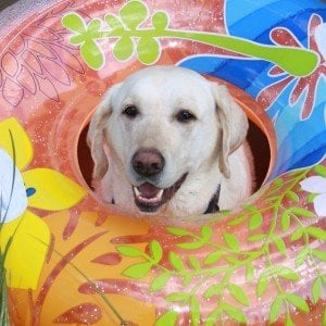 DogTime Days of Summer photo contest winners