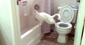 One More Reason Your Cat Should Not Use The Toilet [VIDEO]