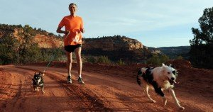 71-year-old CEO to run 170 miles to save shelter pets