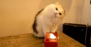 Cat Plays A Theremin
