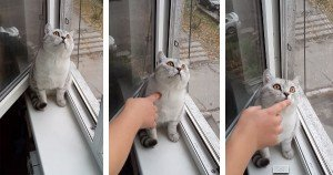 Nothing Can Distract This Cat