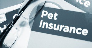 California Law Adds Consumer Protections To Pet Health Insurance