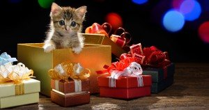 CatTime's 2014 Holiday Gift Guide