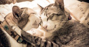 50 Shades Of Spay: Spay & Neuter Health Benefits To Your Cat