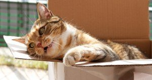 Funny Cats Pictures To Make Your Day Even Better