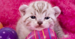 25 Cats Who Are Celebrating Easter