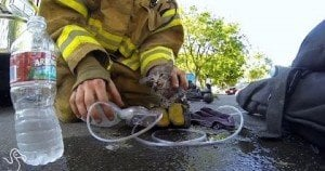 Firefighters Rescuing Kittens [VIDEO]