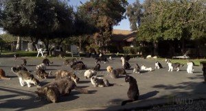 World's Largest Cage-Free No-Kill Cat Rescue