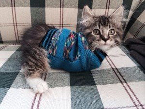 Meet Panckake The Adorable Kitten With Only Two Legs