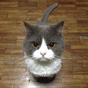 34 Cats Who Are Judging You Right Now