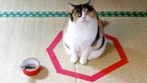 Cat Circles: Why Are So Many Cats Irresistibly Drawn To Circles?
