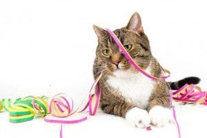 Life Hacks For Cats: How To Throw The Best Cat Party Ever