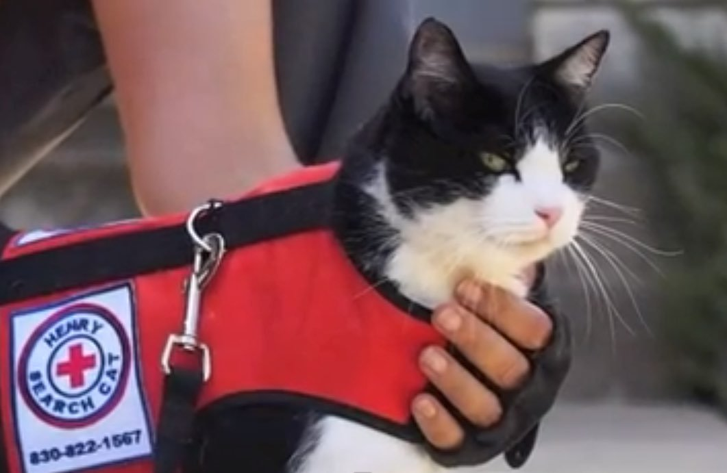 How To Find A Lost Cat Search And Rescue Cat Henry Hot On