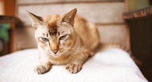Advantages To Adopting A Senior Cat