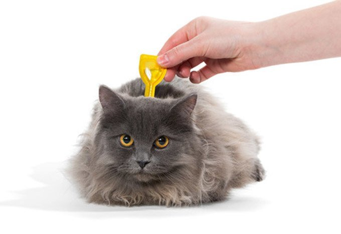 Protect your cat from ticks. (Photo Credit: Shutterstock)