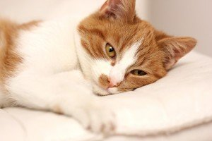 How To Tell If Your Cat Is In Pain And What To Do