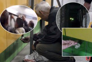 Cat Freed After Five Years Stuck In Wall The Wall At The Cairo Train Station