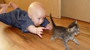 Cats And Babies Playing Together [VIDEO]