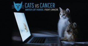 Fighting Cancer With Cat Videos: The Unique Mission Of Cats vs. Cancer