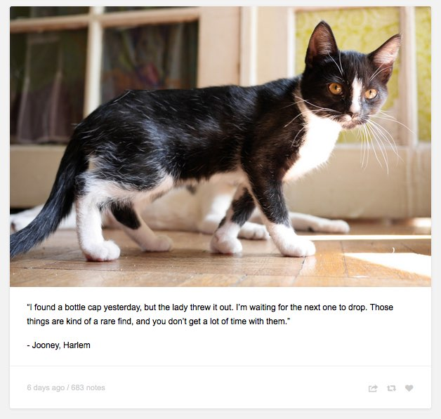 """Felines Of New York — """"I found a bottle cap yesterday, but the lady..."""