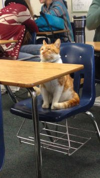 bubba-school-cat-1