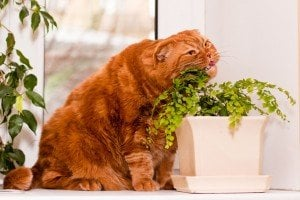 Plants Your Cat Might Like Just As Much As Catnip