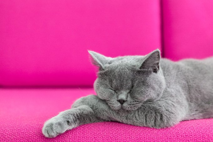 the 6 best ways to clean cat pee cattime. Black Bedroom Furniture Sets. Home Design Ideas