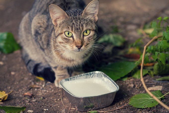 milk-bad-for-cats
