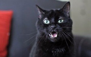 The Top 5 Most Insanely Ridiculous Cat Videos On YouTube