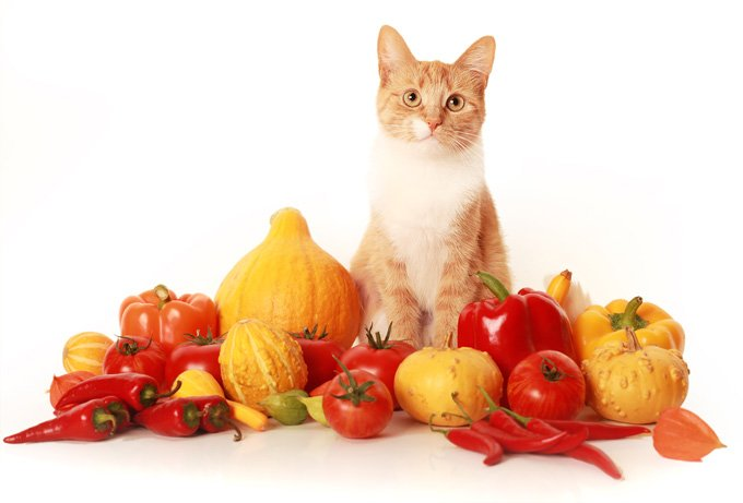 vegan-cat-diet-1