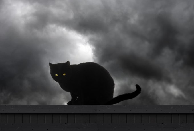 Black Cats: Halloween Hazards, Motivating Myths   CatTime