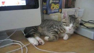 7 Cats Who Just Can't Stay Awake