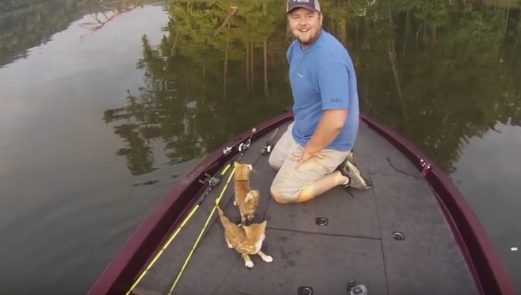 two-kittens-in-river