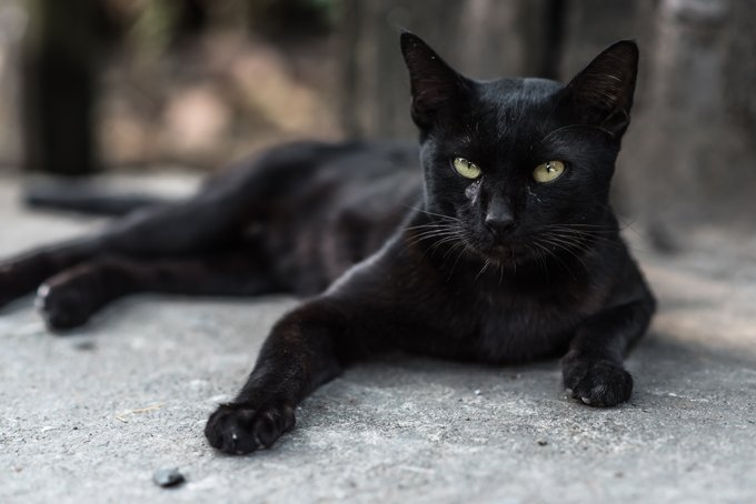 Black Cat Names Cattime