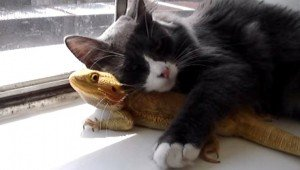 Odd Animal Couples: 10 Cats Who Made Friends With Other Critters