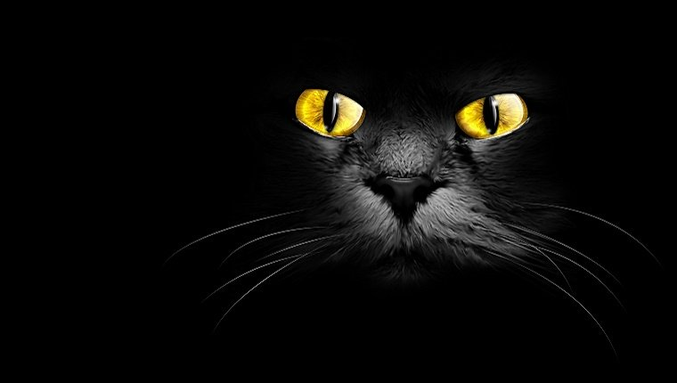 A black cat's face with glowing eyes stares out from a black backround.