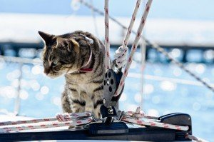 Man And His Cat Rescued In Stormy Seas [AMAZING VIDEO]