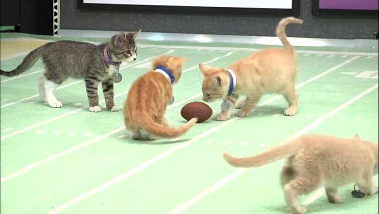 Three kittens surround a toy football on a tiny football field.
