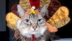Cats Who Are Ready For Thanksgiving [PICTURES]